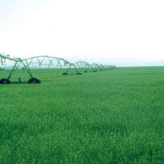 Alfalfa fields and  pivot